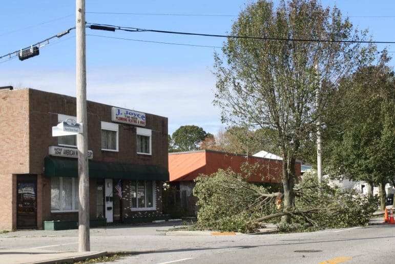 [CREDIT: Beth Hurd] A tree at the corner of Birchwood and West Shore Road, in front of J. Joyce Plumbing, was among the many downed and damaged trees in the Connimicut Village area.