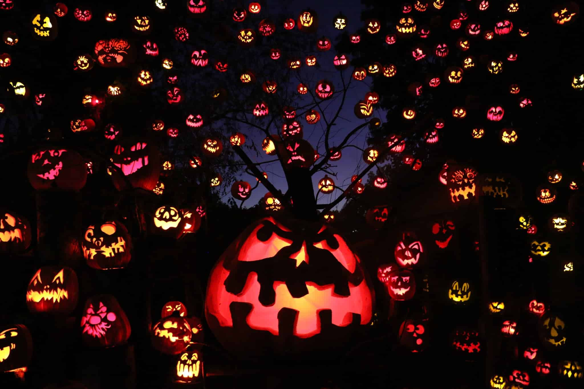 [CREDIT: Roger Williams Park] In this week's Warwick Weekend roundup, the Jack-O-Lantern Spectacular at the Roger Williams Park Zoo is back this year through Oct. 31.